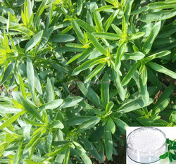 Pure Organic Stevia with Rebaudioside A 60%-99%