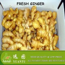 fresh ginger varieties