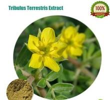 100% Nature Tribulus Terrestris extract 90% Saponins