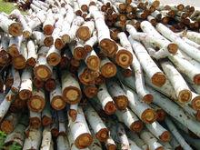Eucalyptus round logs