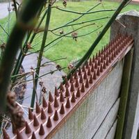 brown plastic intruder pigeon cat bird repeller