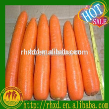 Umbelliferous Vegetables Product Type and Carrot Type Carrots