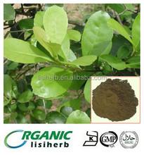 100% natural herbal yerba mate extract powder/yerba mate tea