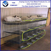 China factory wholesale the angora rabbit farming for sale