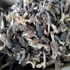 price of black morel mushroom black fungus mushroom magic mushrooms dried
