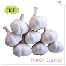 The best quality fresh garlic in China