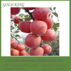 2015 delicious fresh red apple fruit to Middle East market competitive price