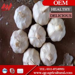 5.0cm nature garlic fresh garlic for sale