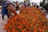 Honey orange /fresh baby mandarin for bangladesh and srilanka market in china