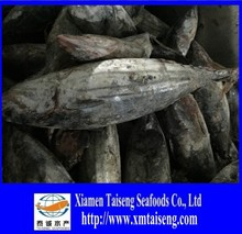 Frozen Skipjack tuna whole round frozen tuna fish price