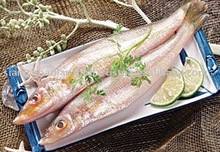 Fresh Hot Sale Frozen Sea Fish for Sale
