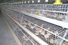 Pullet chicken cage from Poul Tech/ each set can hold 180 birds