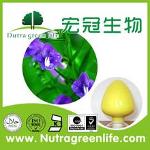 Scutellaria Baicalensis Extract Baicalin 70%-90%,radix scutellariae extract,radix scutellariae