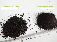 Seaweed Extract Foliar Fertilizer