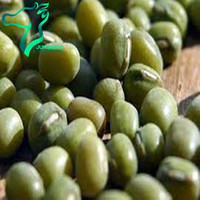 China Green Mung Beans Unpolished,Unskined Moong Dal With Yellow Kernel