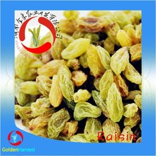2015 Chinese healthy green Raisin / raisin price / dried raisin with low price