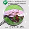 50% Polysaccharides from Reishi mushroom extract