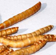 chicken food , freeze dried mealworms