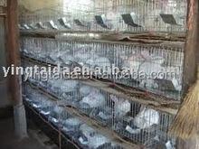 Galvanized welded wire mesh rabbit cage
