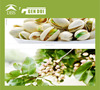 Pistachios california pistachios california pistachios