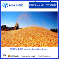 Brazil high quality dry yellow corn maize animal feed corn