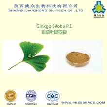 GMP factory Free samples/ginkgo biloba herbal extract/dried ginkgo biloba leaves