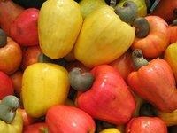 Caju Fruit - Tropical Fruits Brazil