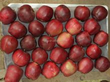 fresh apple for 2014 Fuji apple