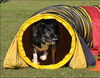 pet toy/dog toy/yellow dog training tunnel