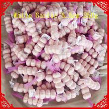 garlic factory cheap jinxiang normal white garlic jinxiang garlic farm