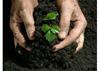 Organic fertilizer Vermicompost (worm compost)