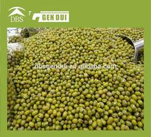 canned green beans Green Mung Bean bulk mung beans