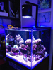 Lumini Aqua Asta 120R1 marine coral led aquarium lighting