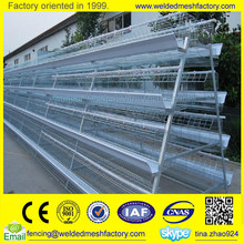 Automatic layer egg/broiler chicken farm chicken house