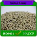 grano de café verde de yunnan distribuidores chino de comercio justo a méxico