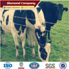 Powder/PVC Coated Welded Wire Fence Panels/Welded Cattle Fence (Factory)/Hot sale high quality export cattle farm fence