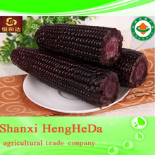 china products rational yellow maize