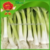 2015 HOTsale garlic sprouts garlic supplement frozen vegetables