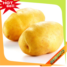 2015OKEYA Fresh Potato , Importers In Dubai, Potato buyers