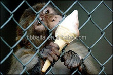 large metal monkey cage with high quality and cheap price for sale
