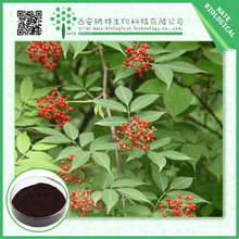 Trading & supplier of China products 100% natural plant extract elderberry extract 15% 25%