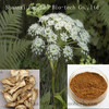 free sample HACCP Kosher FDA dong quai extract,China supplier high quality 98% natural ferulic acid
