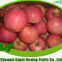 hot sale fresh apple supplier qinguan apple fruit fresh export