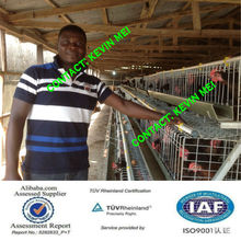 GALVANIZED,3 tiers Material and A Type A type Poultry cage for layer