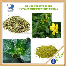High quality damiana extract for women aphrodisiac