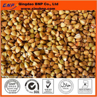 BNP Sells high quality buckwheat extract powder buckwheat shell pillow