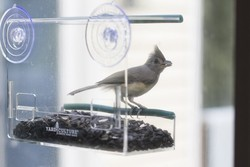 Unique Window Bird Feeder, See Through, Watch Wild Birds Up Close, Removable Seed Tray, Strong Suction Cups