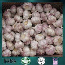 Fresh chinese garlic with health benefit