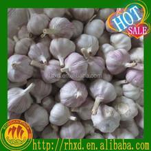 fresh red garlic for sale/fresh red garlic 2015