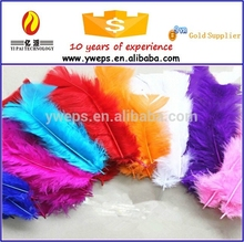 Bulk colour Turkey Feather in sale